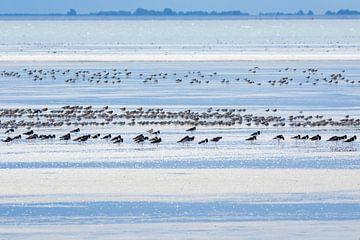 Vögel auf dem Wattenmeer bei Ebbe von Anja Brouwer Fotografie