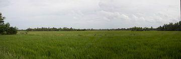 rijstveld pano van Rony Coevoet