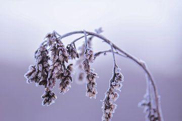 bevroren tak van Tania Perneel