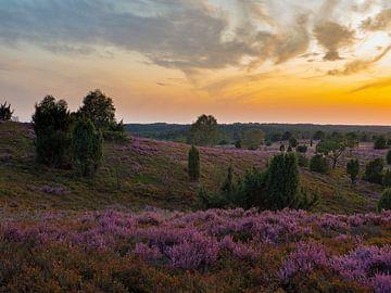 Sonnenuntergang am Wilseder Berg von Katrin May