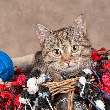 junge Katze von Tony Wuite