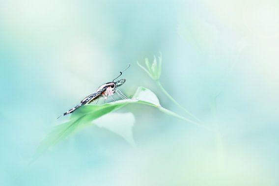 Butterfly van Michelle Zwakhalen