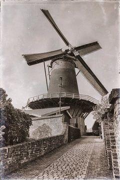 Die Windotter von Jan van der Knaap