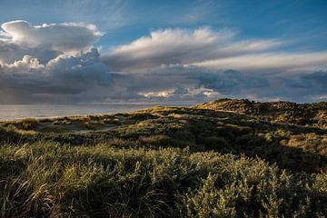 Duinen van Zeeland | Artprint | Natuur | Photographer | Nature van Mascha Boot