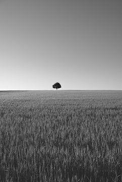 Der einsame Baum in SW von Marc-Sven Kirsch