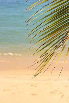 Tropisch strand von Lisette van Oosterhout