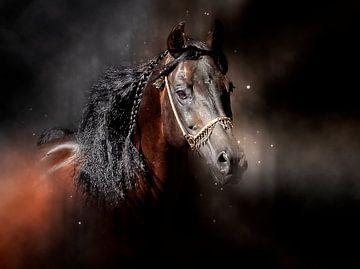 Schöne Pferde von Peter Roder