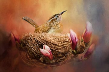 Vogel In Nest Tussen Magnolia Bloemen.