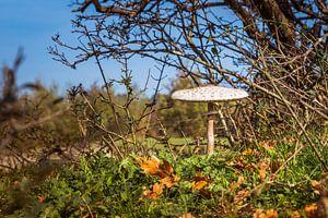 paddenstoel  tussen de herfst bladeren