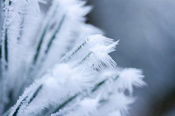 Schneeflocke, Winterfoto von Karijn Seldam
