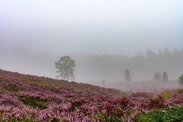 Heidental im Nebel von Tania Perneel