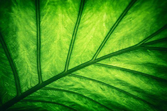 Blad - Groen