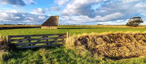 Schapenboet Texel nabij De Hoge Berg van