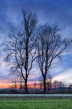 Landelijke winter landschap met prachtige bomen en rode zonsondergang van Tony Vingerhoets