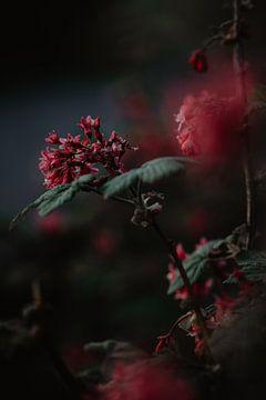 Gek op bloemen van Anouk Strijbos