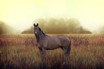 Paard sur Mischa Maas