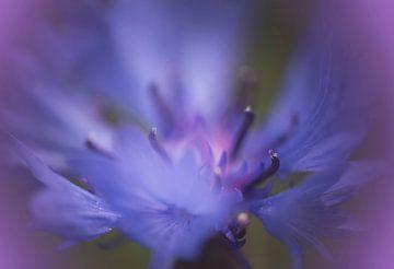 Paarse bloem sur Birgitta Tuithof