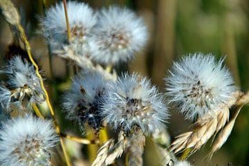 Trockenblumen von wil spijker