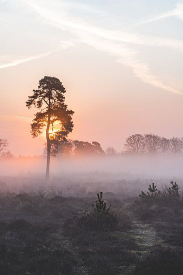 De zachte zonnestralen in een mistige ochtend