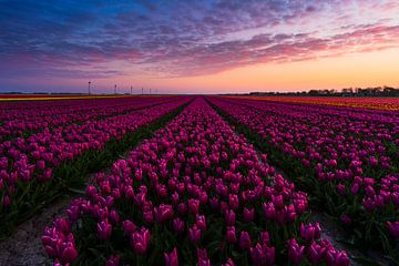 Sonnenaufgang Tulpenfeld von Rick Kloekke