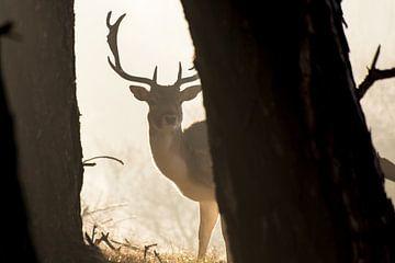 Deer von Niels Boere