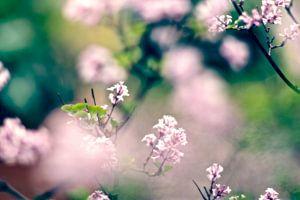 Serenga lente bloemen van Marianna Pobedimova