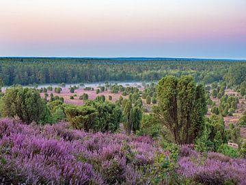 Lüneburger Heide, Dode Grond van Katrin May
