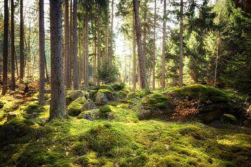 Jungle van Oliver Henze