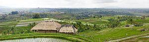 Panorama over een rijstvelden (sawa's) op bali van