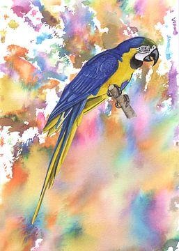 Blau-Gelb-Ara von Jasper de Ruiter
