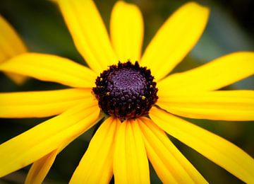 Gelbe Blume von Sharona de Wolf