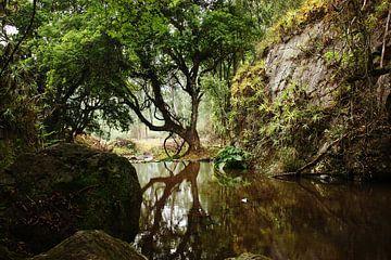 mirroring tree van Meleah Fotografie