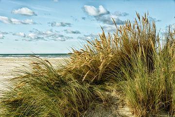 Strand von Dänemark von Claudia Moeckel