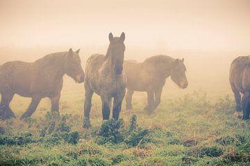Pferde im Nebel von Marcel Bakker