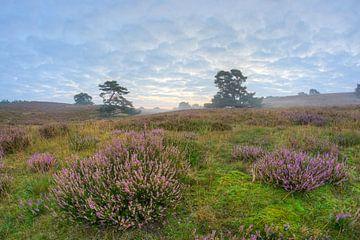 paarse heide bij zonsopkomst von Francois Debets