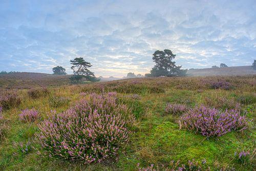 paarse heide bij zonsopkomst van Francois Debets