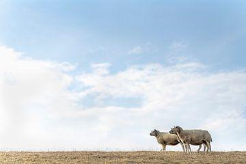 Drei Schafe und ein Vogel von Steven Dijkshoorn