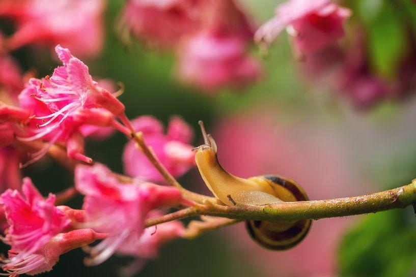 Frühlingszeit von Sergej Nickel