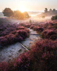 Heide pad van