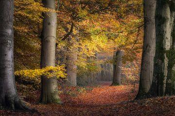 Der Herbst in den Niederlanden von Alex Riemslag