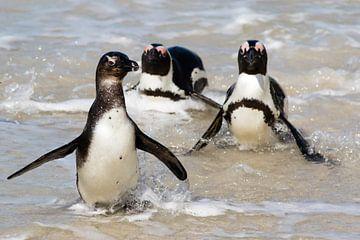 Pinguïns komen uit het water van