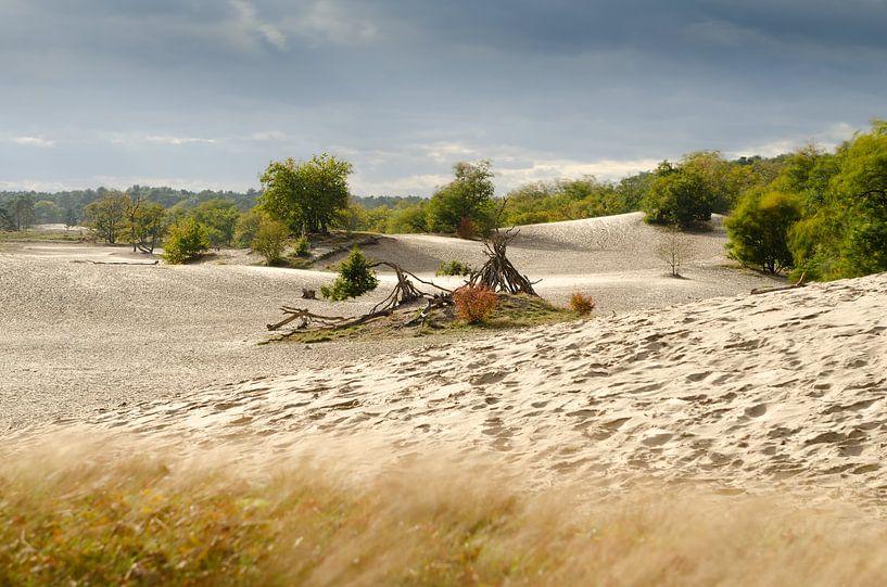 Nederlandse Sahara van Mark Bolijn