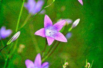 Fleurs roses sur la prairie sur Claudia Evans