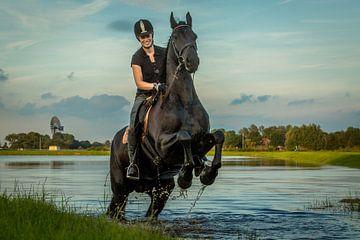 Fries paard Weidum  van piet douma