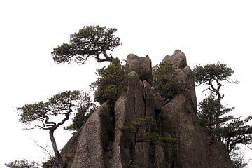 Dennenbomen in Huangshan van Simon Hazenberg