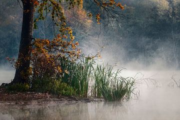 Ruhiger Morgen von Peter Poppe