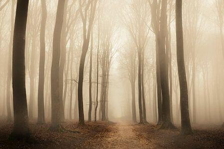Weg durch einen Buchenwald während eines nebligen Morgens