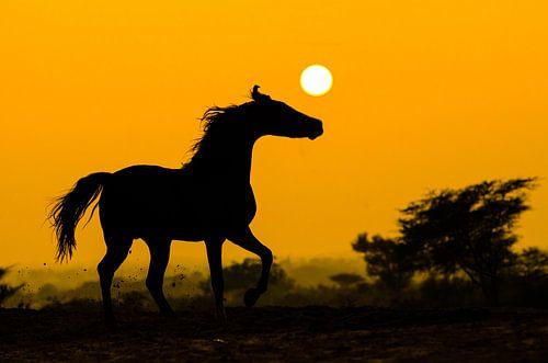 Marwari sunset von Merel Bormans