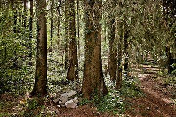 Belgisch Ardennen Landschap van Edwin Wiekens