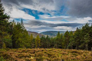Herfst in Schotland von Erwin van Liempd